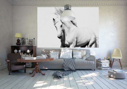 White horse Stallion wallpaper mural for wall